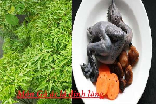 Gà ác nầu gì ngon nhất? Trải nghiệm 25 món ăn ngon từ gà ác